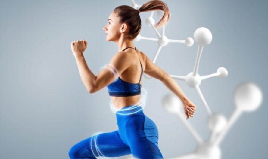 Metabolismo energético para principiantes